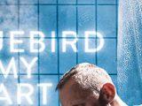 bluebird-slide